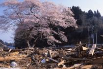 日本の良いところと聞かれたら何と答えますか?