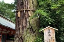 【木や石にも神性を観る日本】