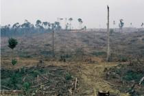 デジタル化が森林破壊を止められるか